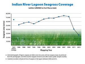 IndianRiverLagoonSeagrass