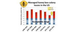 Managed honey bee colony losses in the US