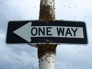 bees_one_way